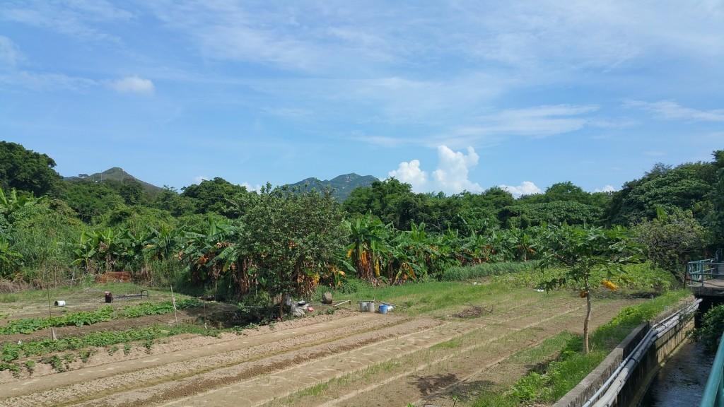 Farm, garden on Lamma Island. Life is Slow here but sure.